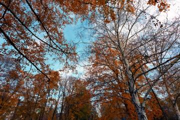 MartenBG | есен в парка | 8 харесвания