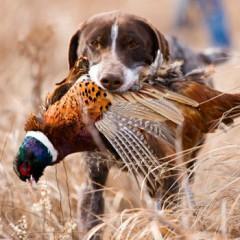 Vehtiya | На лов / Hunting | 1 харесвания