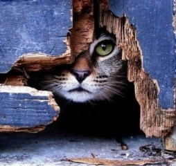 Vehtiya | Котка / Cat | 5 харесвания