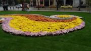 Madam Tulip | орнаменти | 11 харесвания