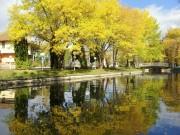 Eliana_m72@mail.bg | Отражения в парка на Монтана | 122 харесвания