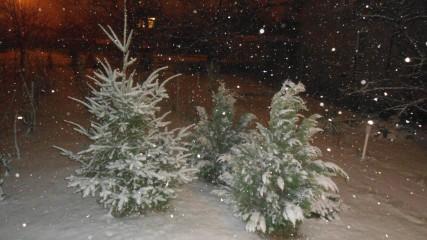 Cdg18vn@abv.bg | Зимна  приказна  нощ | 77 харесвания