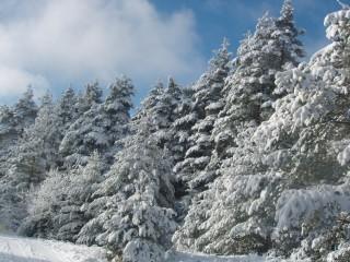 Jpeovska@abv.bg | зимно утро | 56 харесвания