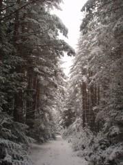 Jpeovska@abv.bg | бяла зима | 23 харесвания