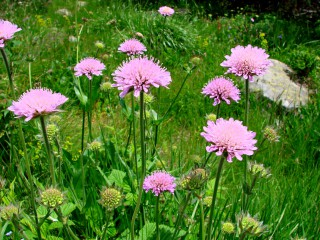Dete_lina1@abv.bg | планинските цветя | 37 харесвания