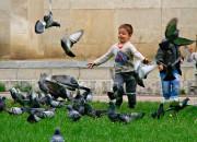 Dete_lina1@abv.bg | игра с гълъбите | 82 харесвания