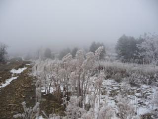 Mayamay@abv.bg | трева в мъгла | 11 харесвания