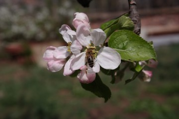 Marietad@abv.bg | Цвят и пчела | 22 харесвания