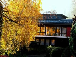 Rumiii55 | Златна есен 2 | 6 харесвания