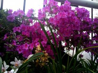 Mecheto72@dir.bg | Орхидеи | 50 харесвания