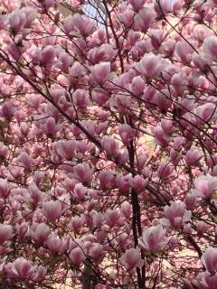 Sideris | цветя | 103 харесвания