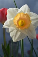 Sideris | цветя | 14 харесвания