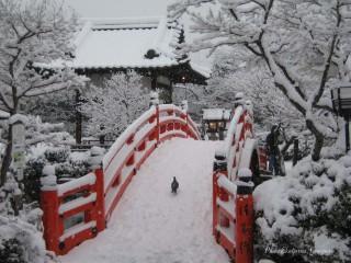 Ekaterinatg@hotmail.com | Сняг в Киото | 134 харесвания