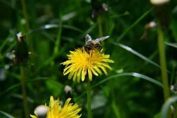 Puhim | Пчеличка | 13 харесвания
