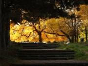 Azur | Утрин в парка | 81 харесвания