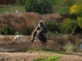 Yankapetrova@yahoo.com | los angeles zoo | 12 харесвания