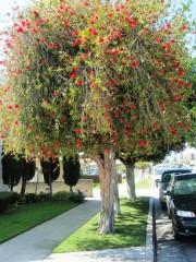 Yankapetrova@yahoo.com | пролет в Лос Анжелис | 116 харесвания
