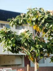 Yankapetrova@yahoo.com | пролет в Лос Анжелис | 12 харесвания
