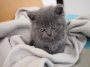 Rossy | Бебе-коте :) | 150 харесвания