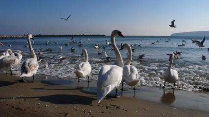 Sorilea | Зимна Варна | 39 харесвания