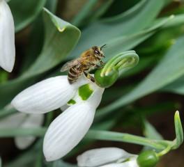 Iluziaa | Пролетно настроение! | 203 харесвания