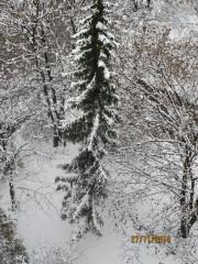 Taratajka | Елха под прозореца | 8 харесвания