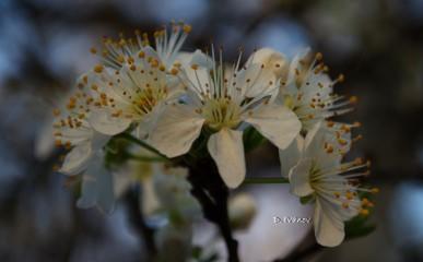 Desislav | Първа пролет | 31 харесвания