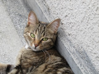 Дон Базилио | Кот гейнстер | 6 харесвания