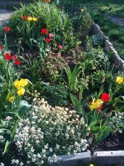 D.cheshmedjieva@abv.bg | Пролет 2014г в софийската градинка | 25 харесвания