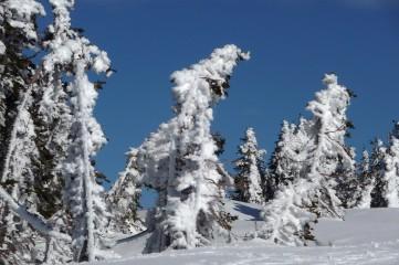 Victoria BC | Високо в планината | 30 харесвания