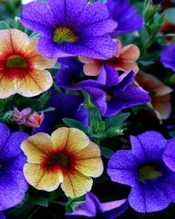 Vali_80@abv.bg | красиви цветя | 125 харесвания